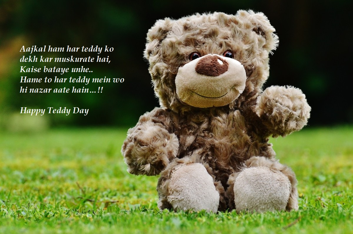 teddy day status for whatsapp
